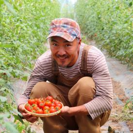 トマト 北海道 当麻産 川端さんの ミディトマト 3kg