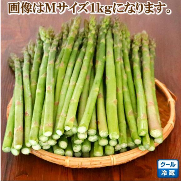 ハウス栽培 北海道富良野産 グリーンアスパラガス Mサイズ1kg 送料無料03