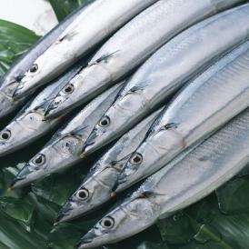 三陸産 鮮 秋刀魚 1尾130g以上保証 総重量3kg(19~24尾入が目安となります) 食べ方ガイド付き 生さんま サンマ