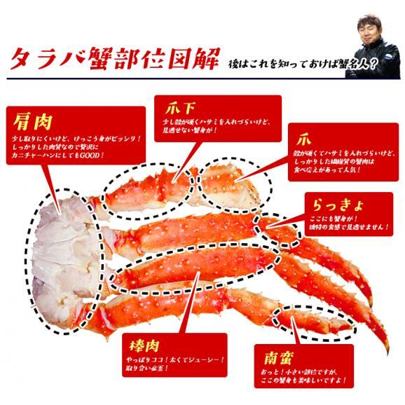 【送料無料】【限界価格1kgで2~3人分】特大!極太!タラバ蟹脚/たらば蟹ここでしか買えない1級品特大ボイルタラバ蟹脚1kg03