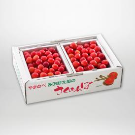 佐藤錦のバラ詰Mサイズ500g×2パックセットです。