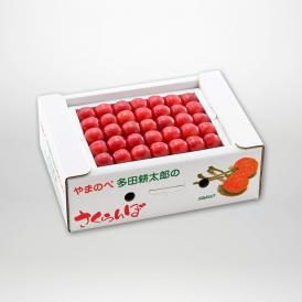 佐藤錦の本詰Lサイズ約500g×1パックセットです。