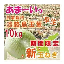 自社契約栽培 淡路島玉葱 極味 10kg 早生