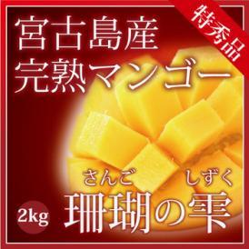 宮古島マンゴーの最高峰「珊瑚の雫」約1kg(2~4個)【発送時期7月中旬~8月上旬】