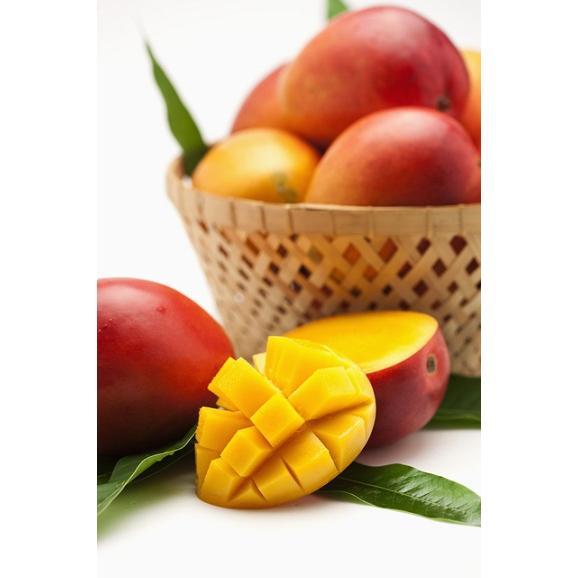 アップルマンゴーとミニマンゴーセット各 2kg 合計約4kg 【発送時期6月中旬~8月上旬】04