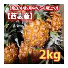 スナックパイン石垣産 約2kg (2~3玉)【発送時期5月上旬~8月上旬】