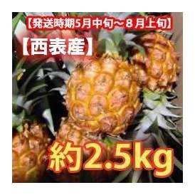 沖縄県産スナックパイン 約2.5kg  (3~4玉) 【発送時期5月上旬~8月上旬】