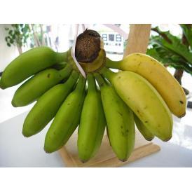 もっちりクリーミー島バナナ約3kg 【発送時期7月上旬〜10月上旬】