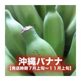 沖縄バナナ約3kg 【発送時期7月上旬~11月上旬】