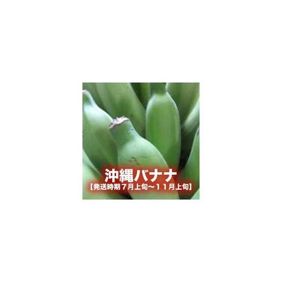 沖縄バナナ約3kg 【発送時期7月上旬~11月上旬】01