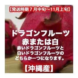 ドラゴンフルーツ赤または白 約2kg 【発送時期7月上旬〜11月上旬】