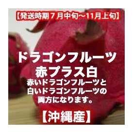 ドラゴンフルーツ赤+白 約2kg 【発送時期7月上旬〜11月上旬】