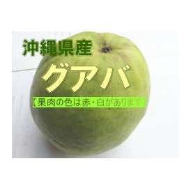 沖縄産グアバ 約2kg(赤・白ありますがお任せになります) 【発送時期6月上旬~10月中旬】