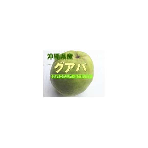 沖縄産グアバ 約2kg(赤・白ありますがお任せになります) 【発送時期6月上旬~10月中旬】01