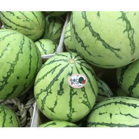 今帰仁スイカ中玉1個 約3.5kg  【発送時期12月中旬~10月上旬】糖度11以上!冬も食べられる、