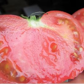 沖縄産トマト約2kg 【発送時期1月上旬~5月上旬】