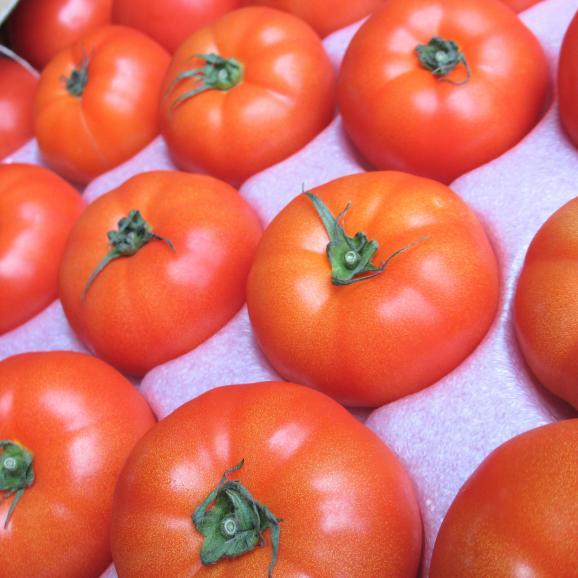 沖縄産トマト訳あり 4~5kg 【発送時期2月上旬~5月上旬】03