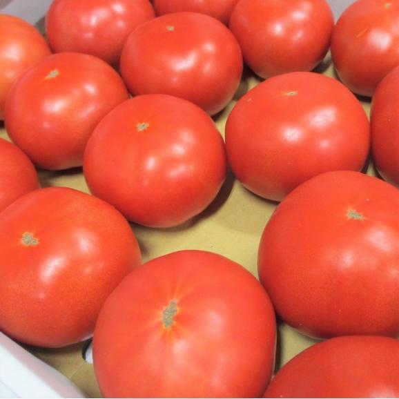 沖縄産トマト訳あり 4~5kg 【発送時期2月上旬~5月上旬】04