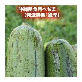 沖縄産食用へちま 約2kg 【発送時期:通年】