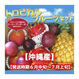 トロピカルフルーツセット【発送時期 6月上旬~7月上旬】