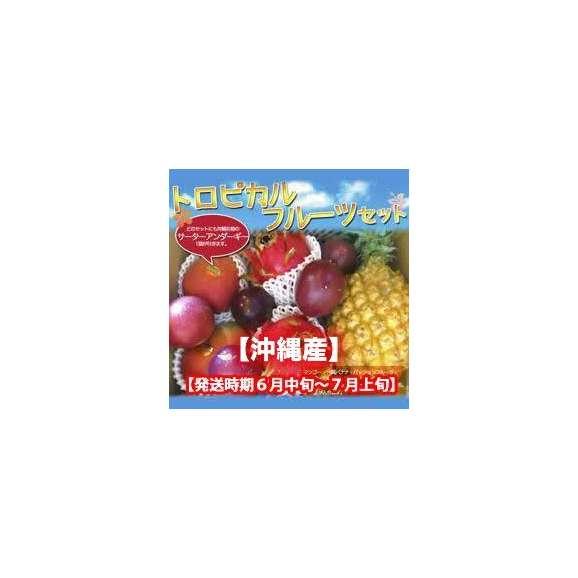 トロピカルフルーツセット【発送時期 6月上旬~7月上旬】01