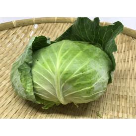 【週末特価セール】沖縄県産キャベツ 10kg(7~12個)