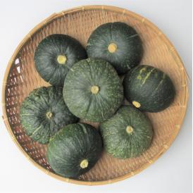 沖縄野菜販売 宮古島産栗かぼちゃ(約10kg)4〜7玉入り 栗ほまれ 【発送時期1月上旬~5月下旬】