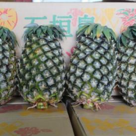完熟島パイン(ハワイ種)5kg(合計3~5個) 沖縄県産・露地栽培