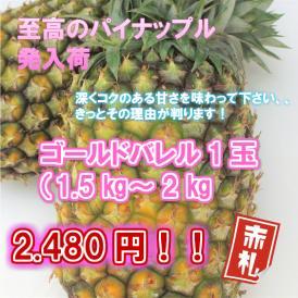沖縄県産 ゴールドバレル 2kg (1~2玉) 4月下旬~9月中旬