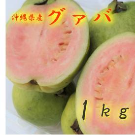 沖縄県産 グァバ 1㎏ 発送6月~9月 沖縄地方ではバンシルーと呼びます。