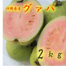 沖縄県産 グァバ2㎏ 発送6月~9月 沖縄地方ではバンシルーと呼びます。