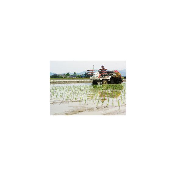 29年産 新米 特別栽培米 山形産 コシヒカリ 置賜(おきたま)指定 5kg 玄米 精白米 7分づき 5分づき 3分づき お好みに精米いたします05