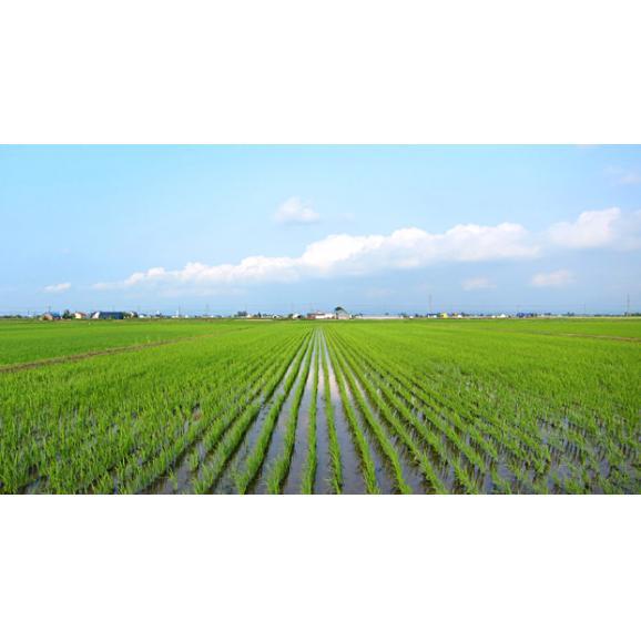 北海道産 特別栽培米 あやひめ 10kg (5kg×2袋) 29年産 送料無料 玄米 精白米 7分づき 5分づき 3分づき オーダー精米05