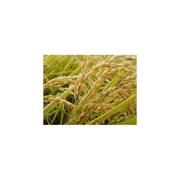北海道産 特別栽培米 あやひめ 10kg (5kg×2袋) 29年産 送料無料 玄米 精白米 7分づき 5分づき 3分づき オーダー精米06