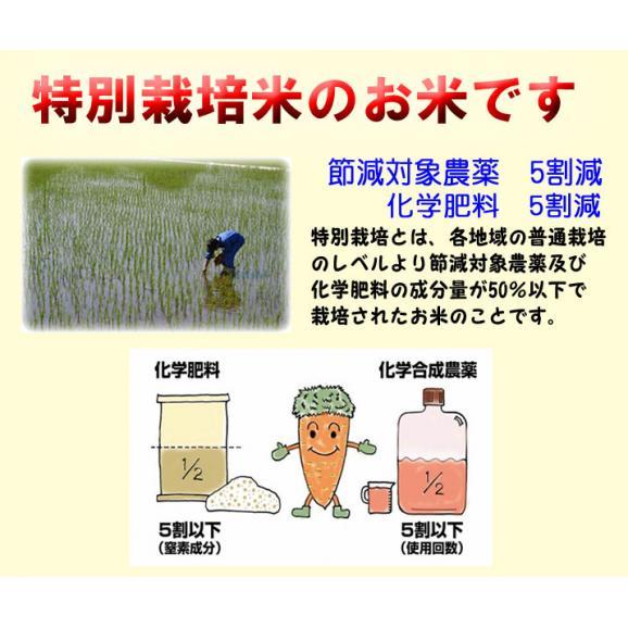 29年産 新米 特別栽培米 島根産 仁多米 コシヒカリ 5kg 送料無料 玄米 精白米 7分づき 5分づき 3分づき お好みに精米します05