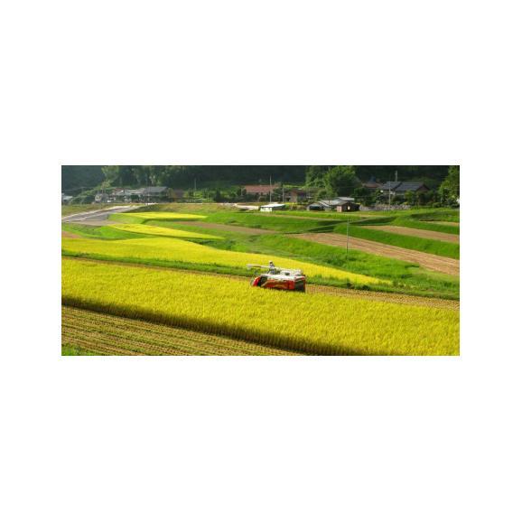 29年産 新米 特別栽培米 島根産 仁多米 コシヒカリ 5kg 送料無料 玄米 精白米 7分づき 5分づき 3分づき お好みに精米します06