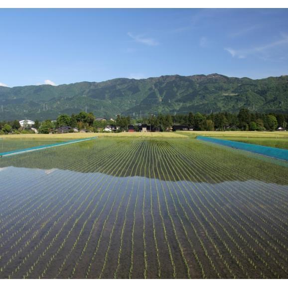 新米 富山産 てんたかく 5kg 29年産 送料無料 玄米 精白米 7分づき 5分づき 3分づき お好みに精米します03