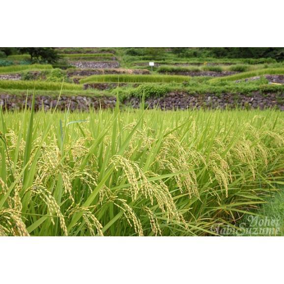 29年産 新米 富山産 てんたかく 5kg 送料無料 玄米 精白米 7分づき 5分づき 3分づき お好みに精米します04