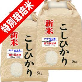 令和 2年産 新米 特別栽培米 吹上 コシヒカリ 10kg (5kg×2) 鹿児島 JAさつま日置産 玄米 白米 7分づき 5分づき 3分づき オーダー精米