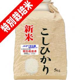 令和 2年産 新米 特別栽培米 吹上 コシヒカリ 5kg 鹿児島 JAさつま日置産 玄米 白米 7分づき 5分づき 3分づき オーダー精米