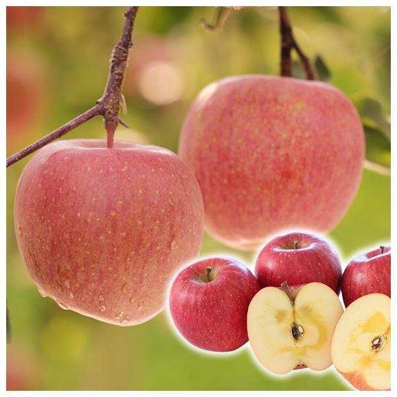 【送料無料!※一部地域除く】 訳あり山形県産小玉サンふじりんご 約5kgバラ詰め01