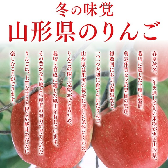 【送料無料!※一部地域除く】 訳あり山形県産小玉サンふじりんご 約5kgバラ詰め03