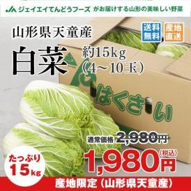 【送料無料※一部地域は別途送料】山形県天童産 白菜 約15kg