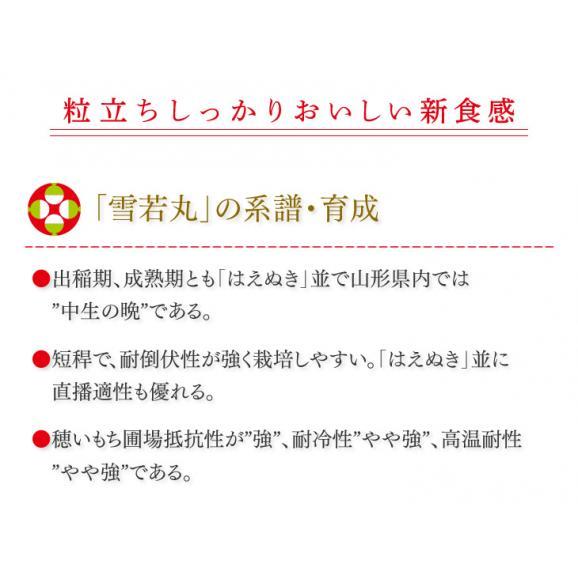 【送料無料】令和元年産新米 山形県産雪若丸精米5kg ※一部地域は別途送料追加02