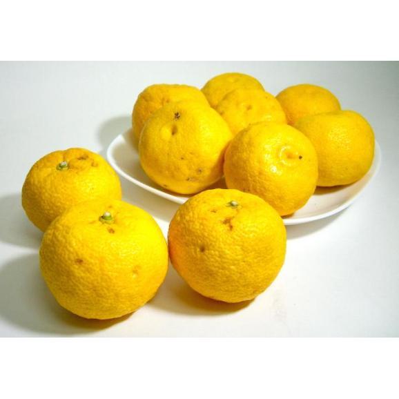 京都産 水尾の柚子 ゆず  1.5kg 18個~21個前後入り01