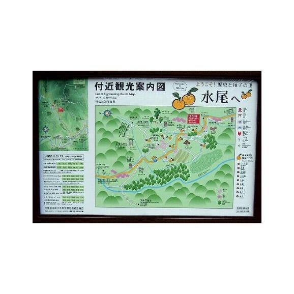京都産 水尾の柚子 ゆず  1.5kg 18個~21個前後入り04