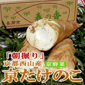 タケノコ 朝堀り 京たけのこ 約4kg (4~10本前後)京都西山産 京やさい お届け日はご希望に添えないこともございます