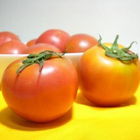 アメーラトマト