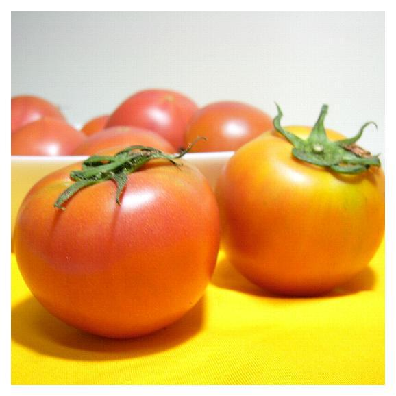 静岡・長野産 アメーラトマト 1kg01