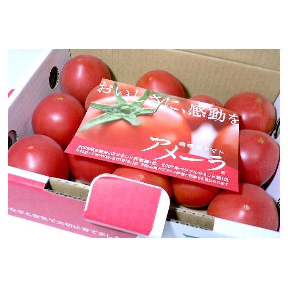 静岡・長野産 アメーラトマト 1kg 高糖度とまと02